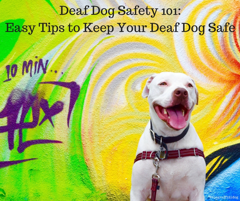 Deaf Dog Safety 101 by The Graffiti Dog