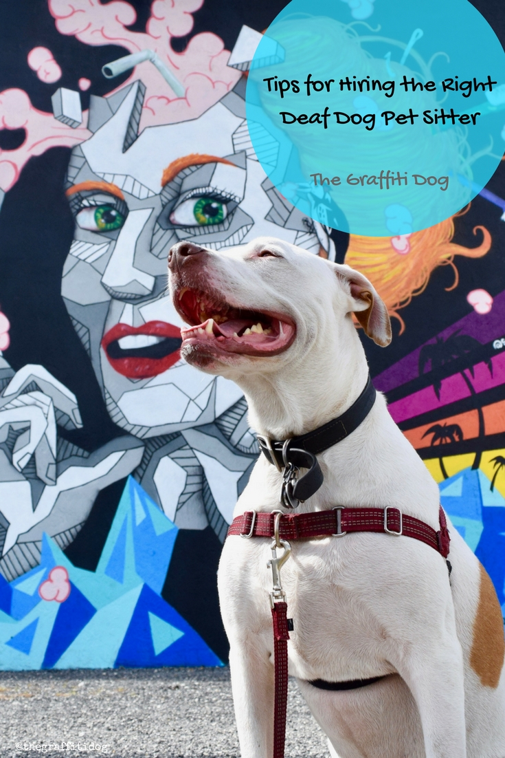 Tips for Hiring the Right Deaf Dog Pet Sitter