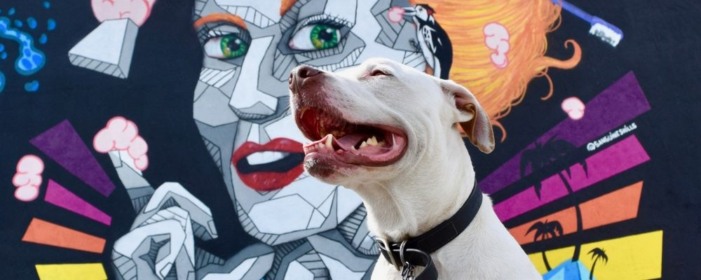 Tips for Hiring the Right Deaf Dog Pet Sitter, Part 1