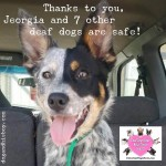 YOU Helped Save 8 Deaf Dogs from Euthanasia!