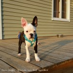 Bowie Lee of Deaf Dogs Rock