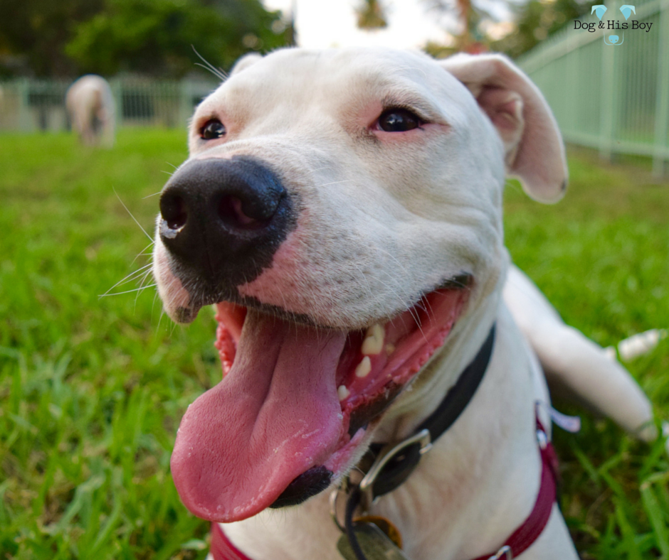 Debunking myths about deaf dogs