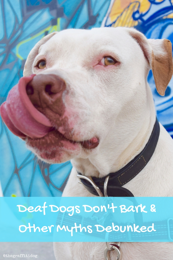 Myths and Facts About Deaf Dogs