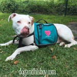 Doodie Pack for Deaf Dogs, Dog & His Boy, deaf Dog Blog, Edison Approved