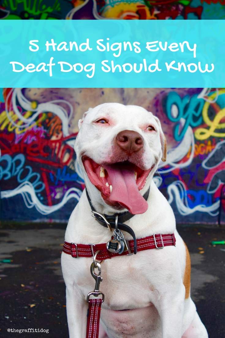 Hand Signs Every Deaf Dog Should Know Deaf Dog Training Made Easy