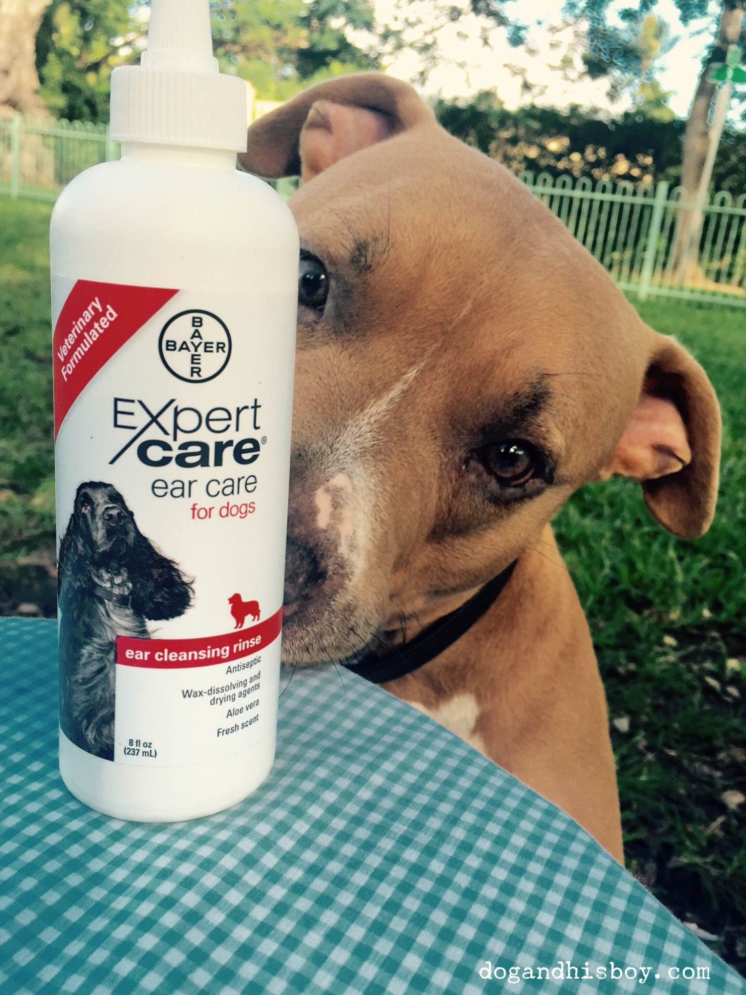 Preventing Deafness in Dogs with Proper Ear Care    #BayerExpertCare