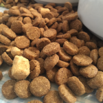 How to Choose the Right Dog Food in 5 Easy Steps