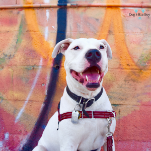 The Four Causes of Deafness in Dogs