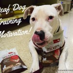 Freeze-dried Raw Boost® Mixers from Instinct® are an excellent high0value reward for deaf dog training! #sponsored