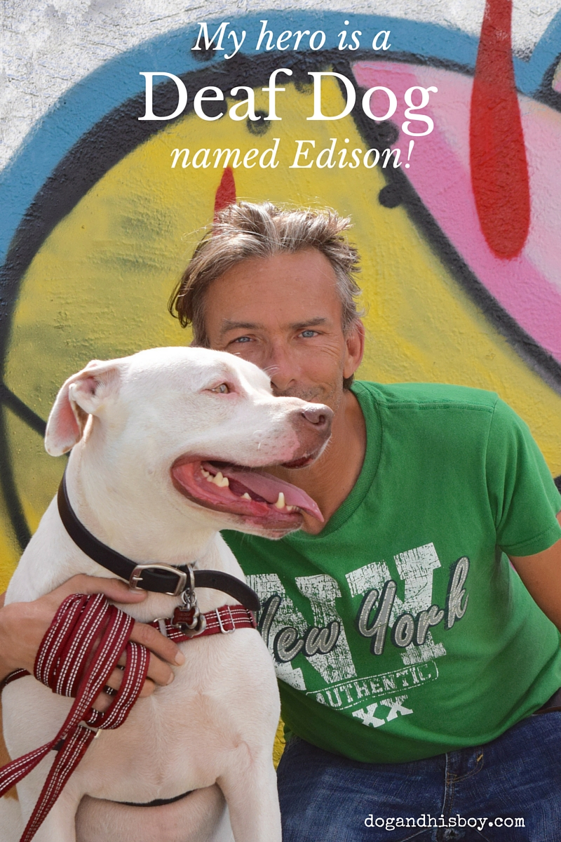 My hero is a deaf dog named Edison! Who is yours? #MyPetIsMyHero #sponsored