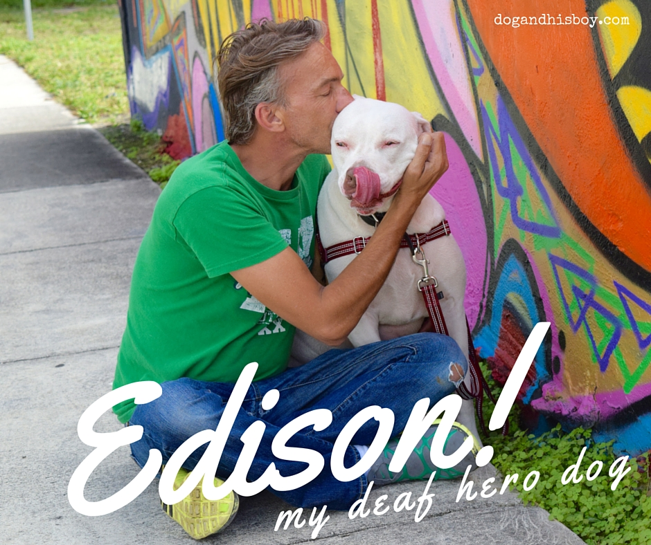 Edison, my deaf hero dog! #MyPetIsMyHero #sponsored