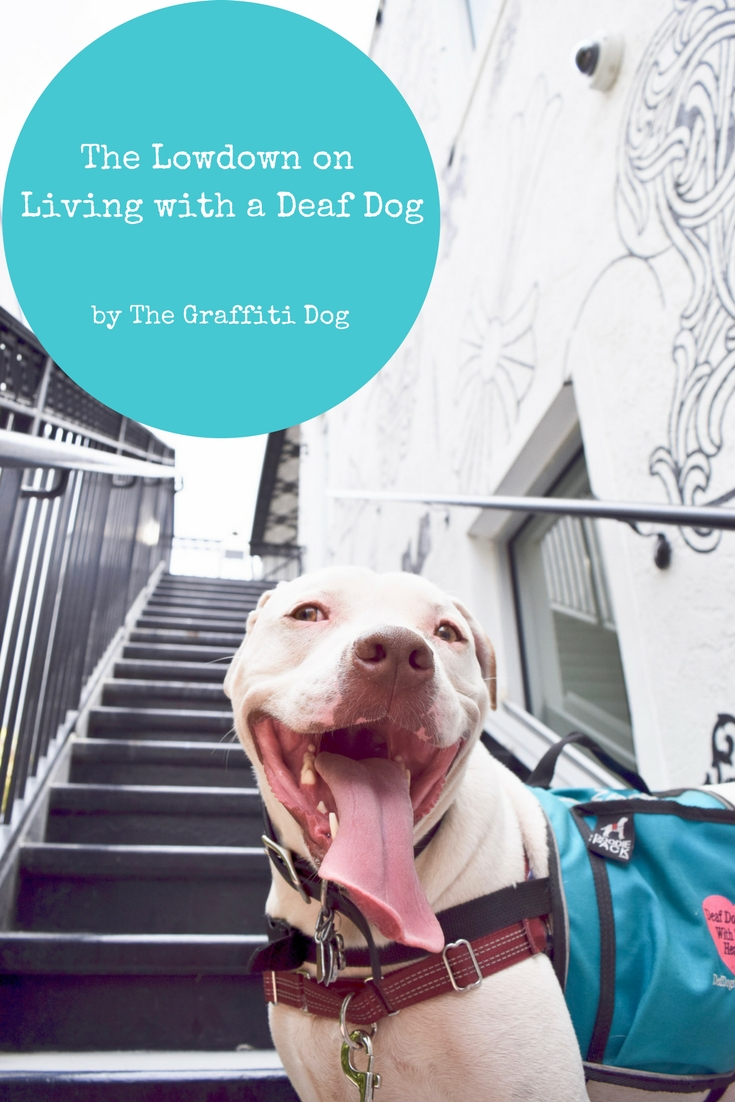 The Lowdown on Living with a Deaf Dog: 4 Deaf Dog Tips