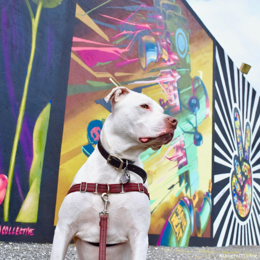 My Dog Sees: A Street Art & Graffiti Photo Diary