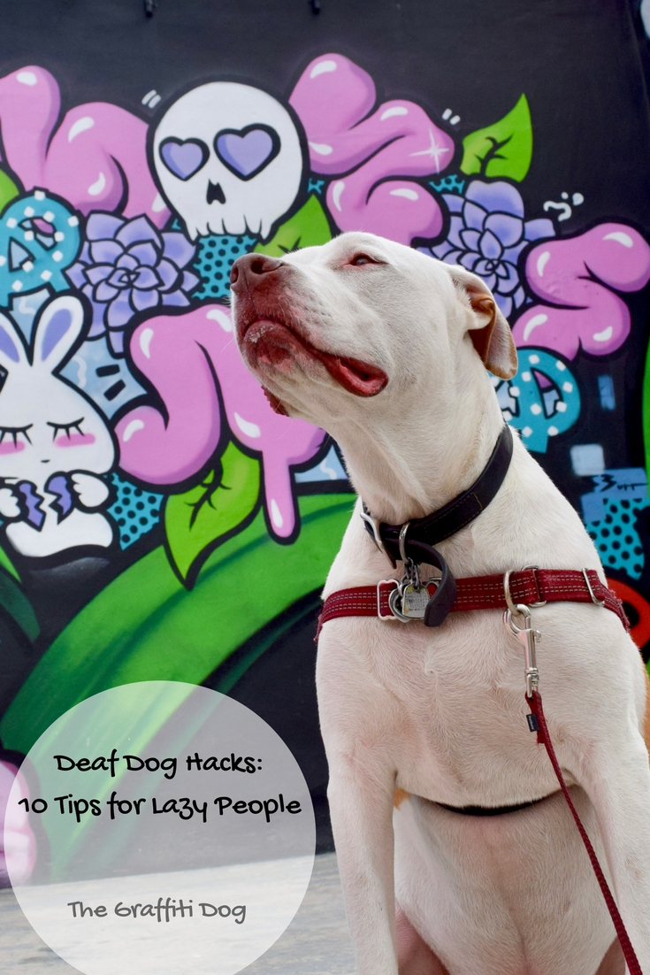 Deaf Dog Hacks: 10 Tips for Lazy People