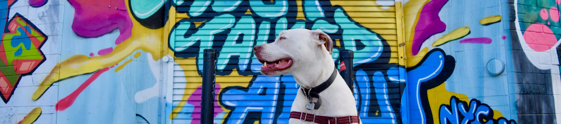 My Husband Has Problems & Other Fun Things I've Learned from My Deaf Dogs