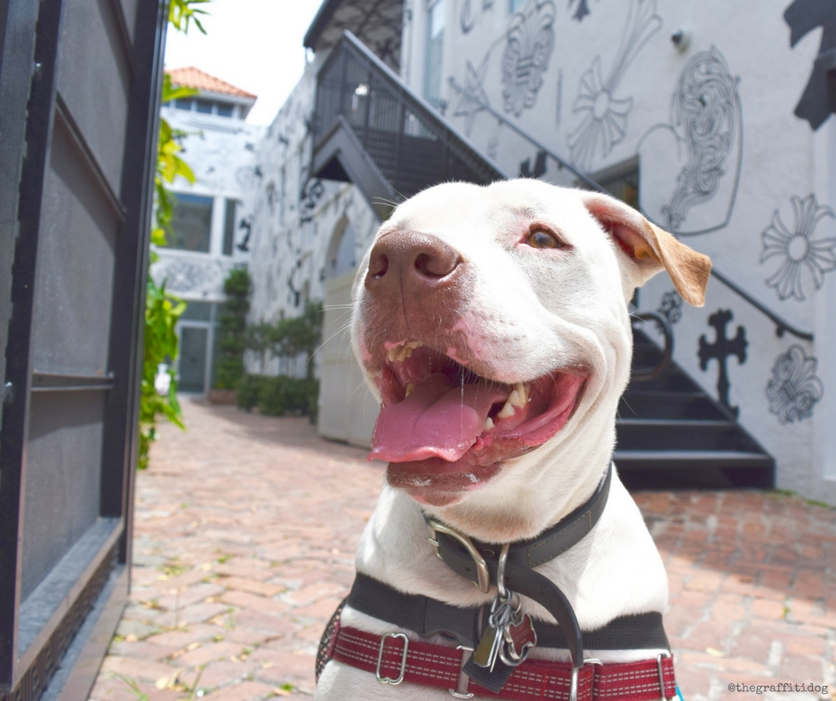 What You Need to Know About Deaf Dogs