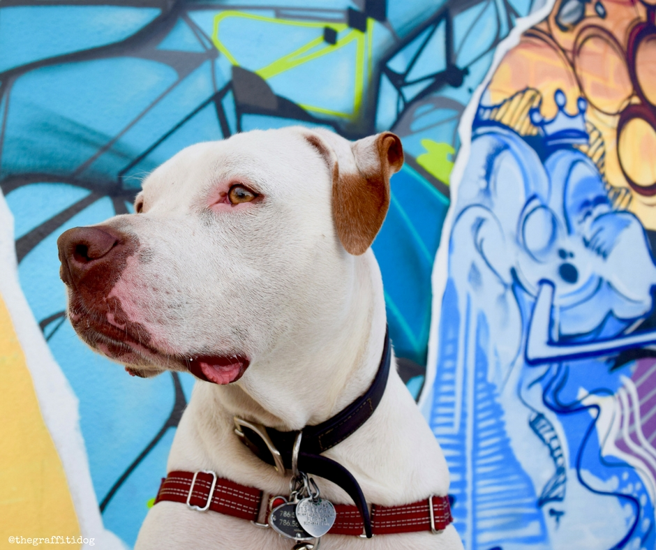 My Deaf Dogs Have Superpowers: Celebrating National Specially-Abled Pets Day
