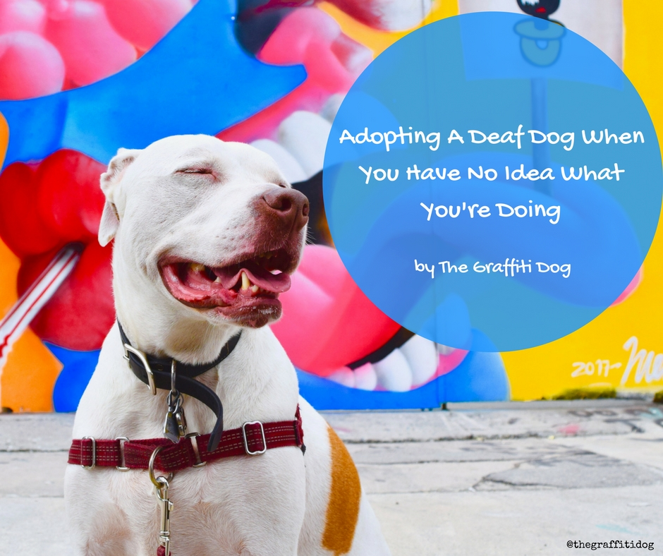 adopting a deaf dog