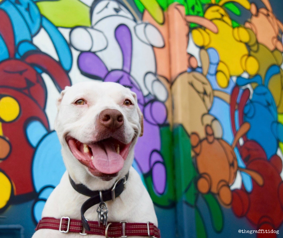 Adopting A Deaf Dog Might Be Right For You If…