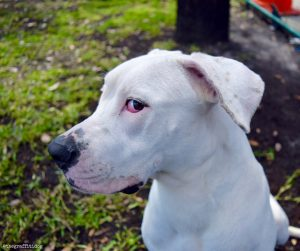 Foster the deaf dog. Deaf Dog Q&A: How Can I Tell If My Puppy Is Deaf?
