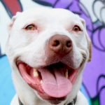 Deaf Dog Q&A: How Can I Tell If My Puppy Is Deaf? Edison the deaf dog with street art