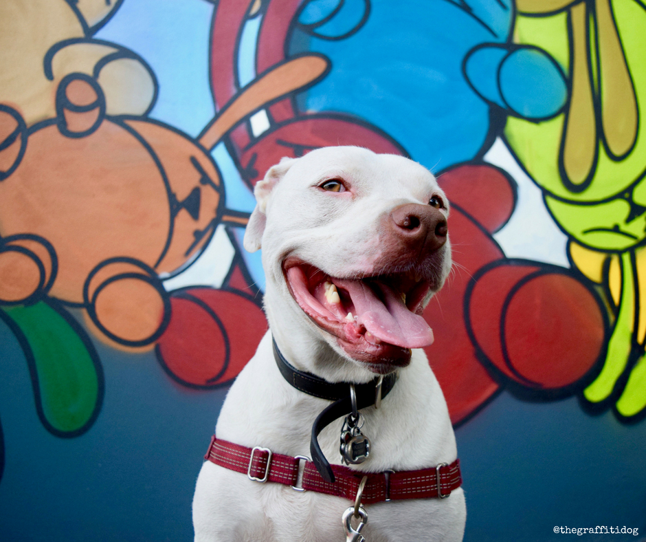 Deaf Dog Q&A: How Can I Tell If My Puppy Is Deaf? The