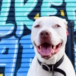 Deaf Dog Q&A: How To Take Photos Of Deaf Dogs?