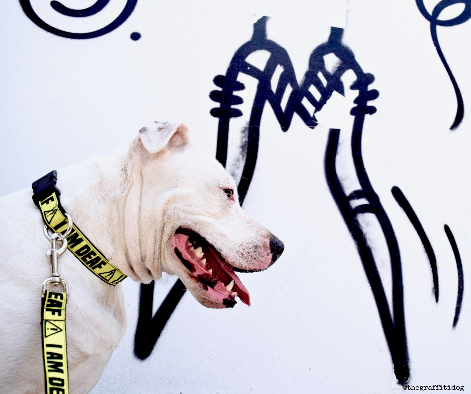 The Benefits of Rotation Feeding by The Graffiti Dog featuring Foster the white deaf dog with black and white street art