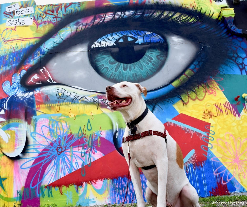 Behind The Scenes At Dr. Harvey's: Transparency, Values and Customer Service by The Graffiti Dog featuring white deaf dog Edison with street art by My Dog Sighs