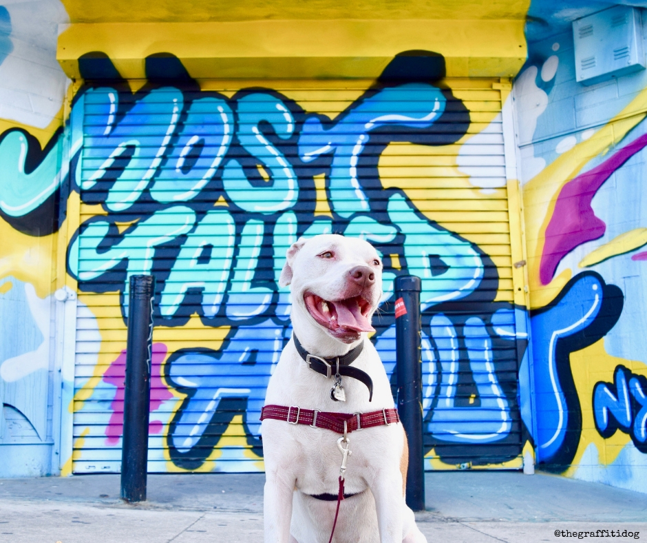 Deaf Dog Q&A: How To Take Photos Of Deaf Dogs? with featuring Edison the white deaf dog with street art