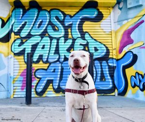 The Benefits of Rotation Feeding by The Graffiti Dog